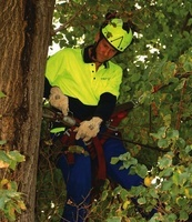 cable bracing reduces the risk of injury to persons or property during the tree pruning process