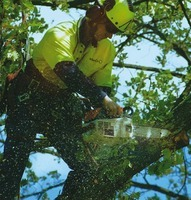 pro active tree pruning