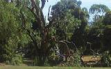 reduce tree hazards on your property