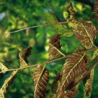 tree disease treatment plans