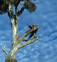 tree felling safety