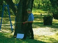 Arborist tree report