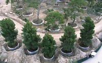 tree stock, tree stock register, source trees from all over Australia