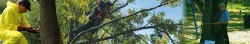ArborCo – The tree care experts, are not just better or different; we are unique in tree care.